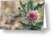 Pink Star Greeting Card