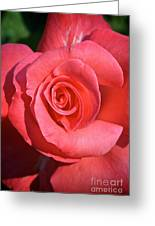 Pink Tea Rose Greeting Card