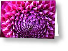 Pink To Purple Dahlia Greeting Card