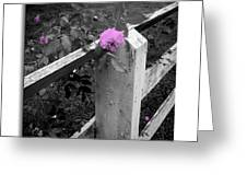 Pink Touch Greeting Card