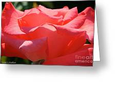 Pink Touch Of Class Petals Greeting Card