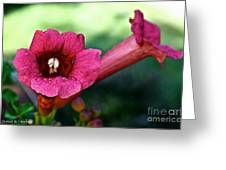 Pink Trumpets Greeting Card