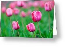 Pink Tulip Bed Greeting Card