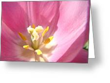 Pink Tulip Flower Prints Spring Tulips Floral Greeting Card by Baslee Troutman