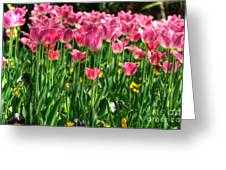 Pink Tulip Flowers Greeting Card