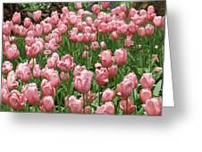 Pink Tulips 2 Greeting Card