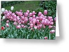 Pink Tulips 3 Greeting Card