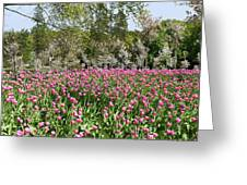 Pink Tulips And Blossom 1 Greeting Card