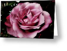 Pink Velour Greeting Card