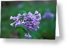 Pink Virginia Bluebells 1c Greeting Card