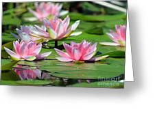 Pink Water Lilies Greeting Card