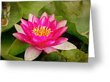 Pink Water Lilly Greeting Card