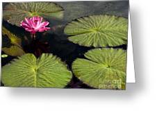 Pink Water Lily I Greeting Card