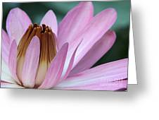 Pink Water Lily Macro Greeting Card by Sabrina L Ryan