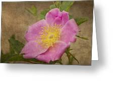Pink Wild Rose Greeting Card