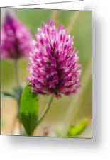 Pink Wildflower Greeting Card
