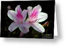 Pinka-dilly Greeting Card