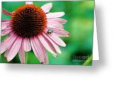 Pinking Shears Greeting Card