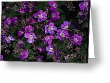 Pinkish-purple Wildflowers Geranium Greeting Card