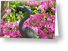 Pinkness Of A Bird Greeting Card