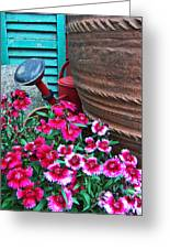 Pinks The Garden Beauty - Dianthus Greeting Card