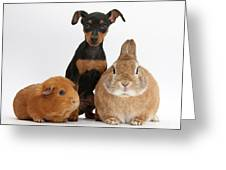 Pinscher Puppy With Rabbit And Guinea Greeting Card