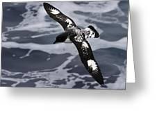 Pintado Petrel - Ancient Mariner Greeting Card