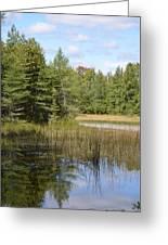 Pintail Pond Greeting Card