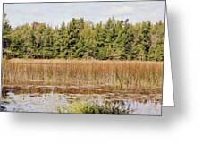 Pintail Pond3 Greeting Card