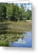 Pintail Pond4 Greeting Card