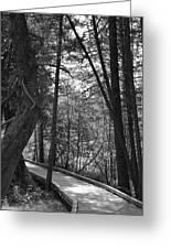Pintail Trail2 Greeting Card