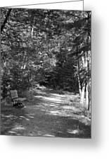 Pintail Trail3 Greeting Card