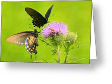 Pipevine Swallowtails In Tandem Greeting Card