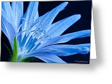 Pistil's Of Chicory Greeting Card