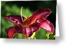 Pistons Of The Pink Yellow Lily Greeting Card