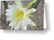 Pitaya Flower Greeting Card