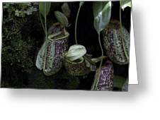 Pitcher Plant Inside The National Orchid Garden In Singapore Greeting Card