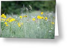 Plains Yellow Daisy Greeting Card