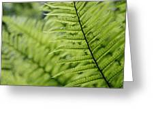 Plant Detail, Close Up Greeting Card