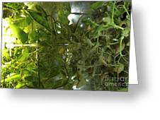 Plant Growth Experiment, Iss Greeting Card