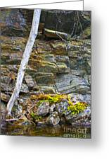 Plant Life On Rocky Canadian Lake Shore Greeting Card