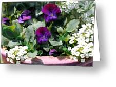 Planter Of Purple Pansies And White Alyssum Greeting Card