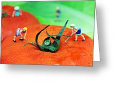 Planting On Tomato Field Greeting Card