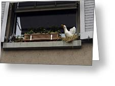 Plants And Animal Figures In The Balcony Of A Building In Lucern Greeting Card