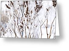 Plants In Winter Greeting Card