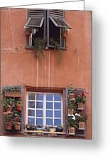 Plants On Window Sill Greeting Card