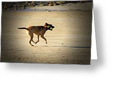 Playing Ball On The Beach  Greeting Card