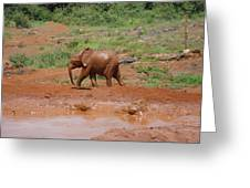 Playing In The Mud Greeting Card