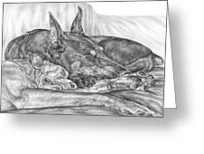 Pleasant Dreams - Doberman Pinscher Dog Art Print Greeting Card by Kelli Swan
