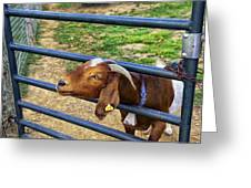 Please Exonerate Me - Billy Goat Greeting Card